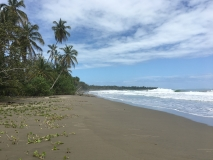 Majestic beach in Cahuita National Park