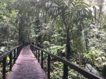 The trail in Cahuita National Park