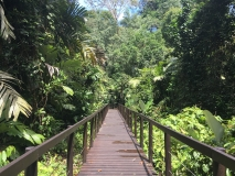 Bridge in Cahuita National Park