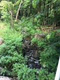 Flynn Creek, water source at start of Holy Hill Segment