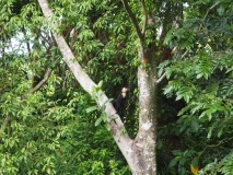 Monkey outside our apartment