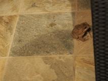Toad at Casa Vela